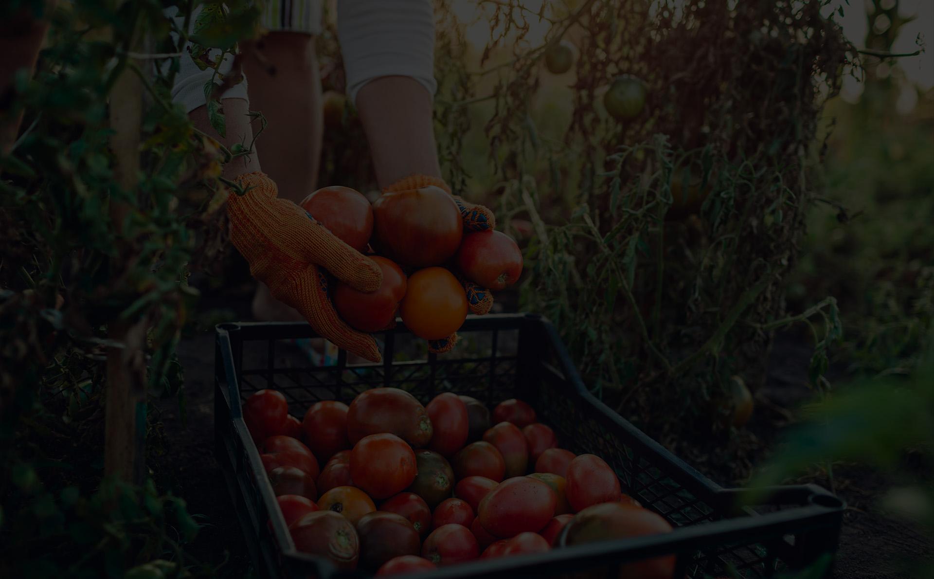 Exploitations agricoles et fermes bio
