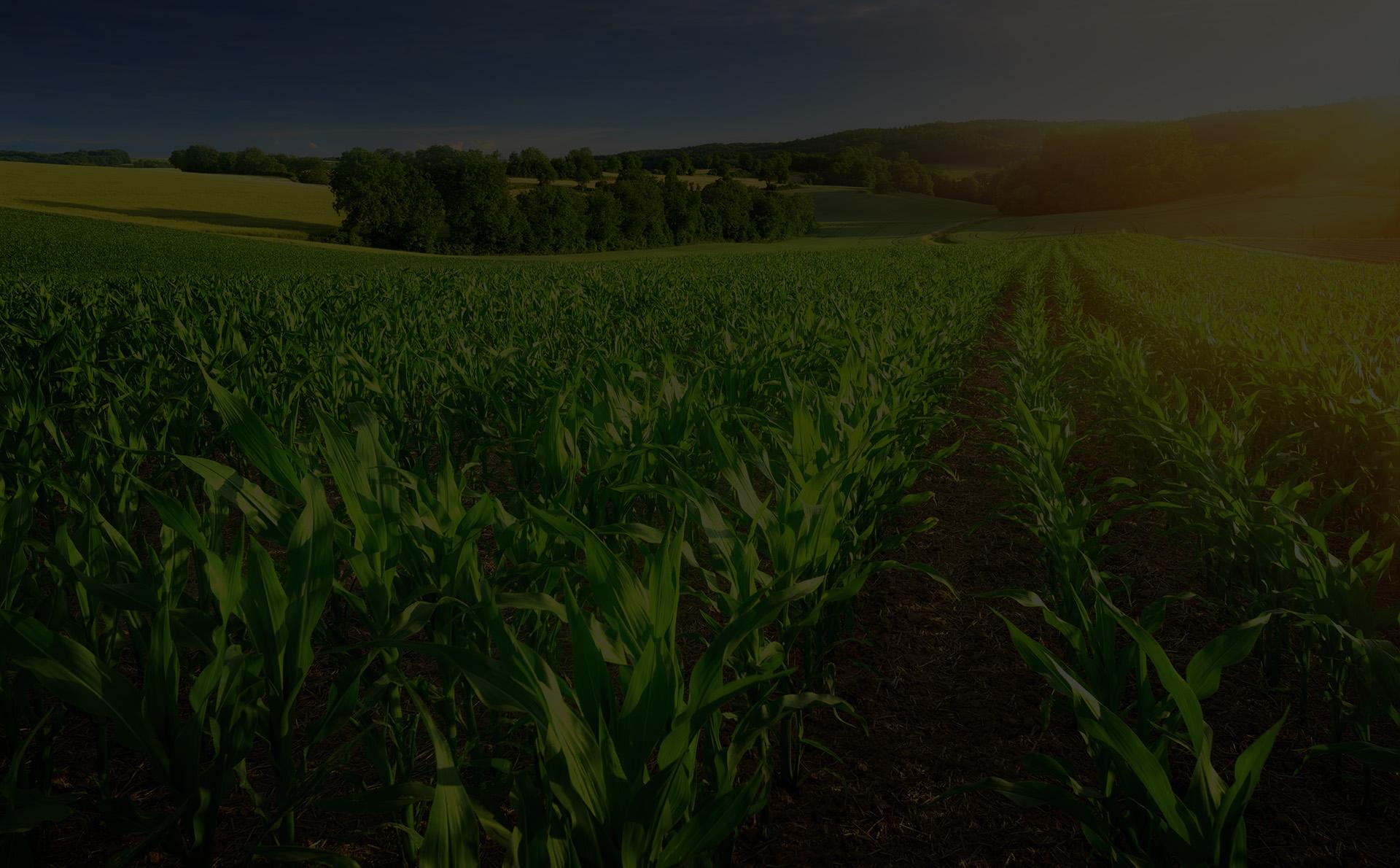 Vers une nouvelle agriculture verte